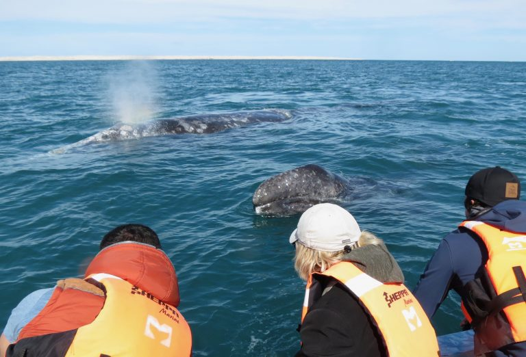 Petting Mama and Baby whales off the Baja Coast.