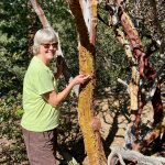 Lessons on Shedding From The Manzanita